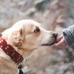 Les raisons de l'achat d'un toilettage pour chien