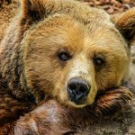Devenir soigneur animalier, ce que vous devez savoir