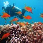 Ordinateurs de plongée et les avantages dont ils bénéficient