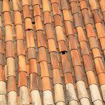 Les tuiles: terre cuite ou béton, quels avantages?